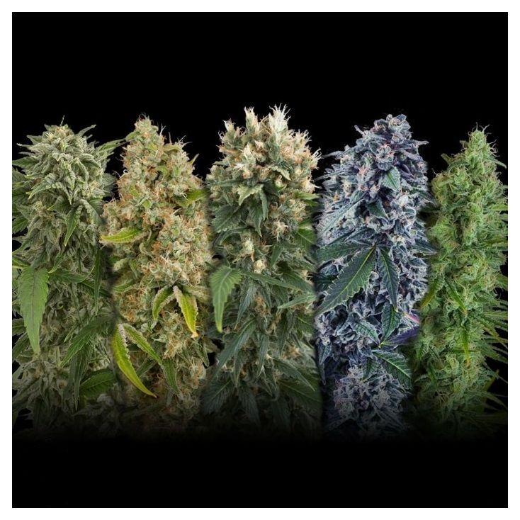 Российские семена конопли как дуют марихуану
